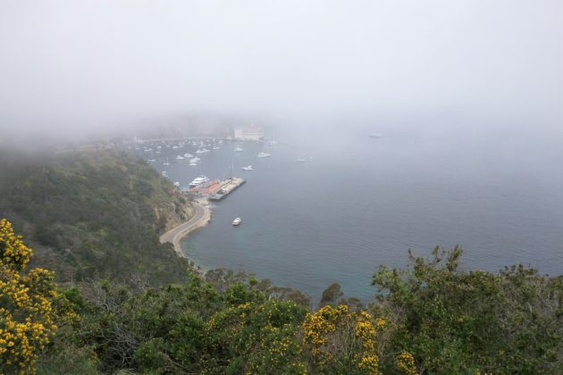 "<img src=""Catalina Island.jpg"" alt=""ガスってるカタリナアイランド""/>"