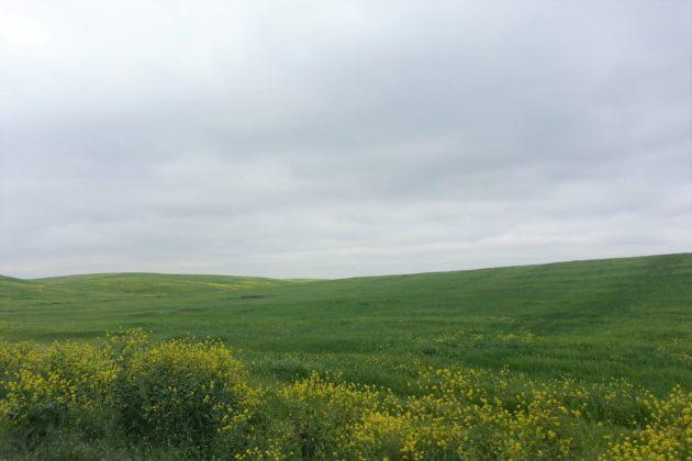 """<img src=""""Field.jpg"""" alt=""""セコイアに行く途中の菜の花畑""""/>"""