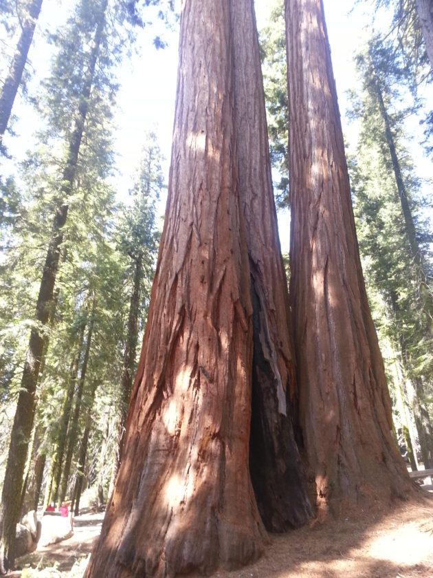 "<img src=""Sequoia.jpg"" alt=""セコイア国立公園の巨大杉""/>"