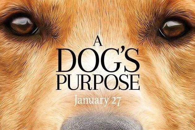 "<img src=""A Dog's Purpose.jpg"" alt=""僕のワンダフルライフ""/>"