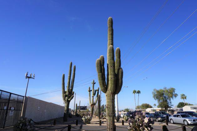 """<img src=""""Cuctus.jpg"""" alt=""""アリゾナ街中巨大なサボテン""""/>"""