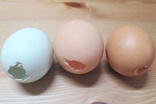 "<img src=""Eastereggs.jpg"" alt=""イースターエッグ用の卵の殻""/>"